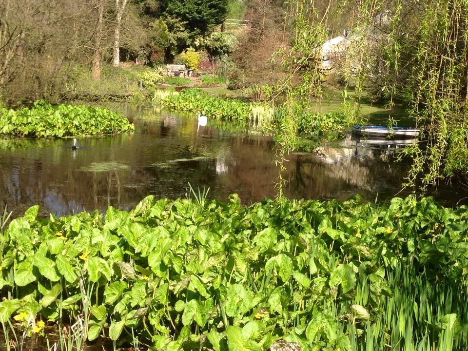 spring swans