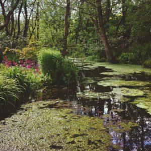 stonyford-water-gardens
